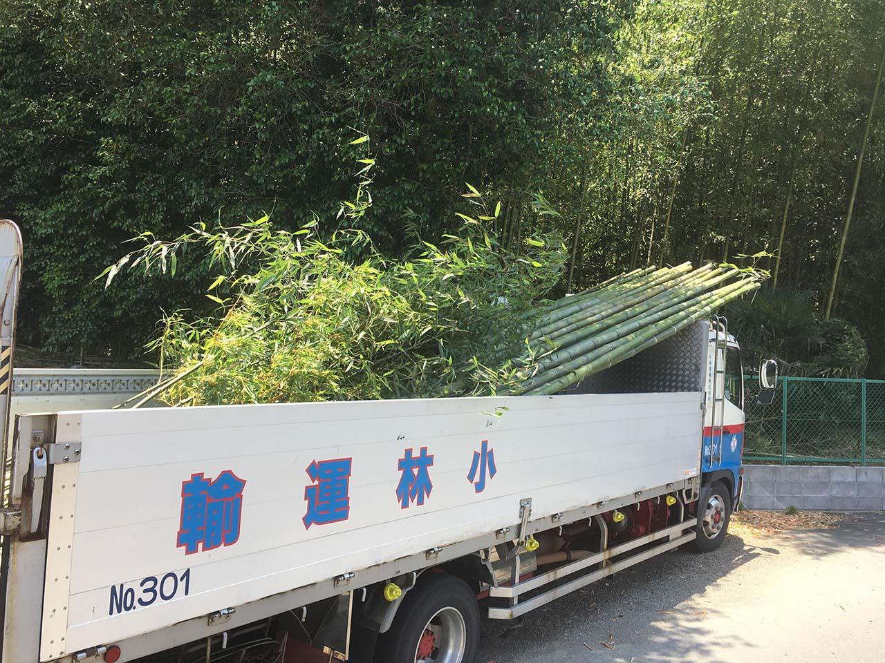 平塚市内の竹やぶ