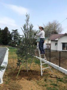 オリーブ記念植樹